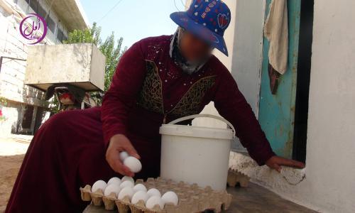 مشروع الدجاج البياض (4)